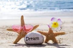 与岩石的两个海星在海滩 免版税库存图片
