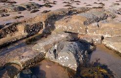 与岩石的在海岸线的海滩和海草 免版税库存照片