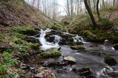 与岩石的森林小河在阿尔登,比利时 免版税库存图片