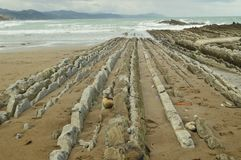 与岩石的海滩组成由与古新的Geopark巴斯克路线联合国科教文组织的复理层类型的形成的化石纪录 射击 免版税图库摄影