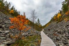 与岩石的秋天风景在拉普兰,芬兰 免版税库存图片