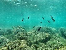 与岩石礁石和海草的鱼 免版税库存照片