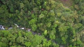 与峡谷的高鸟瞰图高地在密林 股票录像