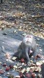 与崽的猴子 免版税图库摄影