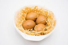 与巢的被隔绝的鸡蛋有白色背景 图库摄影