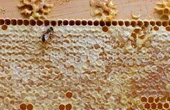 与工作的蜂的蜂窝 金黄的背景 库存图片