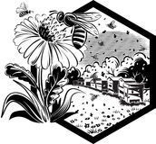 与工蜂的六角形框架在花 库存图片