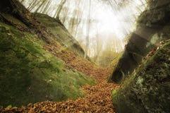 与巨大的峭壁的有上面阳光的山和森林 免版税库存图片