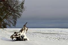 与巨大的死的树桩的冬天沿海风景在海滩 免版税库存图片