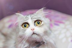 与巨大的眼睛的哀伤的小猫 免版税库存图片
