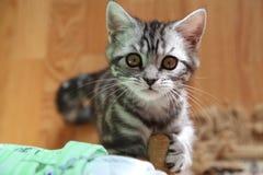 与巨大的眼睛的小猫 库存照片