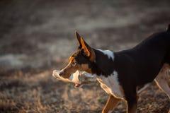 与巨大的骨头的狗 免版税库存照片
