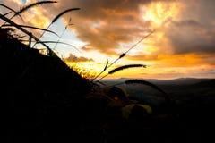 与帐篷和日落天空的禾本科 图库摄影