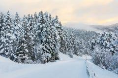 与带领通过多雪的冷杉木森林的路的圣诞节背景  库存图片