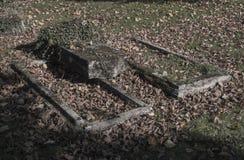 与常春藤和下落的le的两个老没有遵守的放浪被放弃的坟墓 免版税库存照片