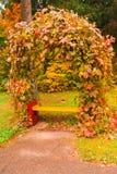 与常春藤的公园长椅在秋天 库存照片