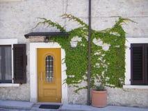 与常春藤的橙色门 库存图片