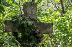 与常春藤的石十字架 免版税图库摄影