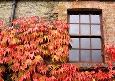与常春藤的窗口在秋天,在爱尔兰 库存图片