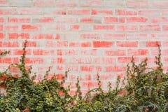 与常春藤的红色墙壁砖 免版税图库摄影