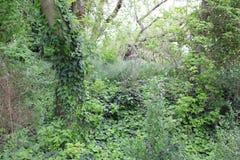 与常春藤的结构树 免版税库存图片