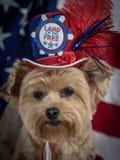 与帽子和旗子背景的爱国Yorkie狗,红色白色和蓝色 免版税库存图片