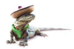 与帽子和围巾的墨西哥鬣鳞蜥 免版税库存照片