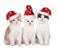 与帽子的三只逗人喜爱的圣诞节猫 免版税库存照片