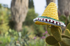 与帽子的西班牙仙人掌 免版税库存照片