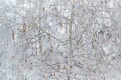 与干叶子的桦树冬天 免版税库存图片
