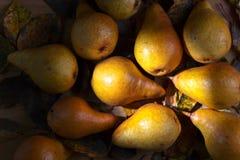 与干叶子的水多的成熟梨 免版税库存图片