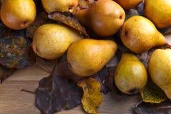 与干叶子的水多的成熟梨 免版税库存照片