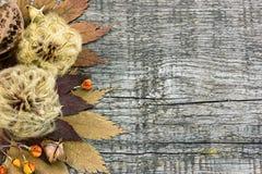 与干植物,坚果,在土气的叶子的秋天构成求爱 库存照片