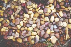 与干燥叶子、土壤和植物的五颜六色的岩石纹理 免版税库存图片
