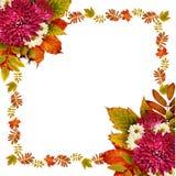 与干燥叶子和翠菊的秋天框架开花花束 库存图片