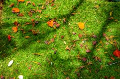 与干燥叶子和阴影的草的大树枝 免版税图库摄影