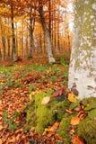 与干燥叶子的丛林 免版税库存照片