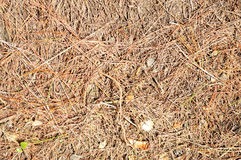 与干燥叶子的土壤 免版税库存照片