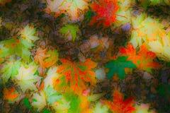 与干燥叶子的拼贴画 免版税库存图片
