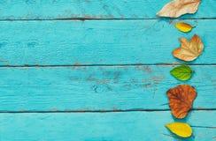 与干燥叶子的秋天背景在木桌上 免版税图库摄影