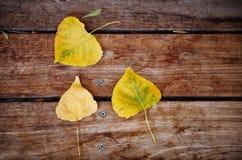 与干燥叶子的秋天背景在木甲板 免版税图库摄影