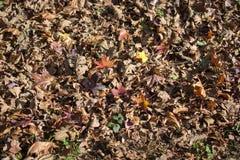 与干燥叶子的秋天背景 库存图片