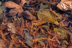 与干燥叶子的秋天背景 图库摄影