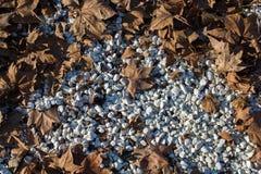 与干燥叶子的秋天背景 免版税库存照片