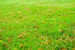 与干燥叶子的绿草 库存图片