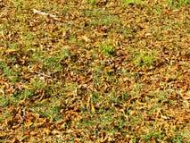 与干燥叶子的背景 秋天,秋天 库存照片