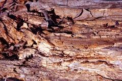 与干燥叶子,自然有机背景的老被风化的树干 库存图片