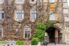 与干燥常春藤的老大厦在门面在萨默塞特 免版税库存照片