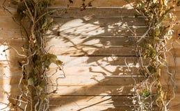 与干燥枝杈的木背景 免版税图库摄影