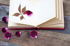 与干燥标本集叶子的开放书 免版税库存照片